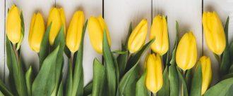 Påsketulipaner påske og pinsefrokost Rødvig Kro og Badehotel